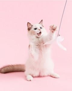 Aprilone - 仙女逗貓棒羽毛鈴鐺長桿耐咬貓咪玩具 | 可替換